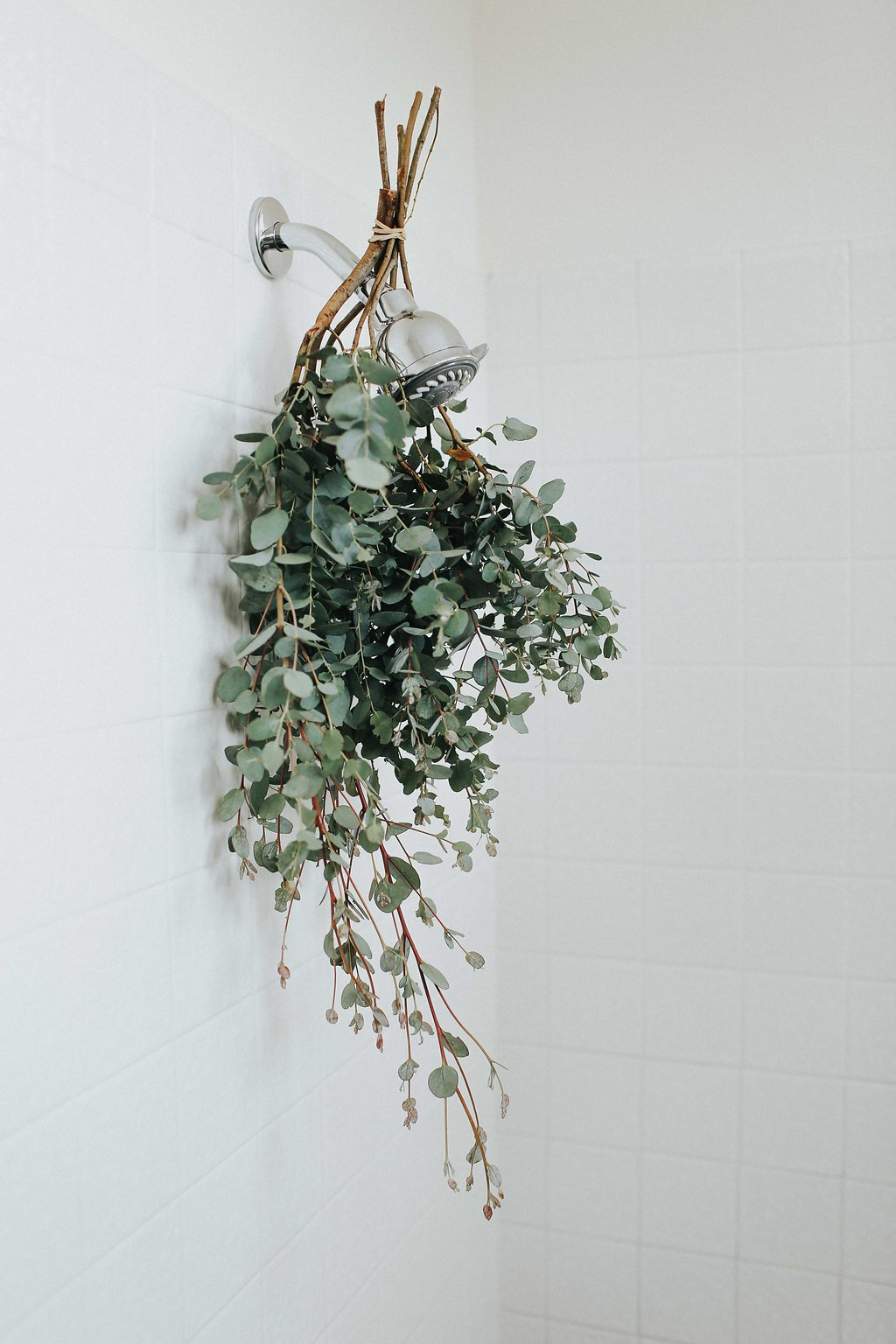 hanging eucalyptus in relaxing shower