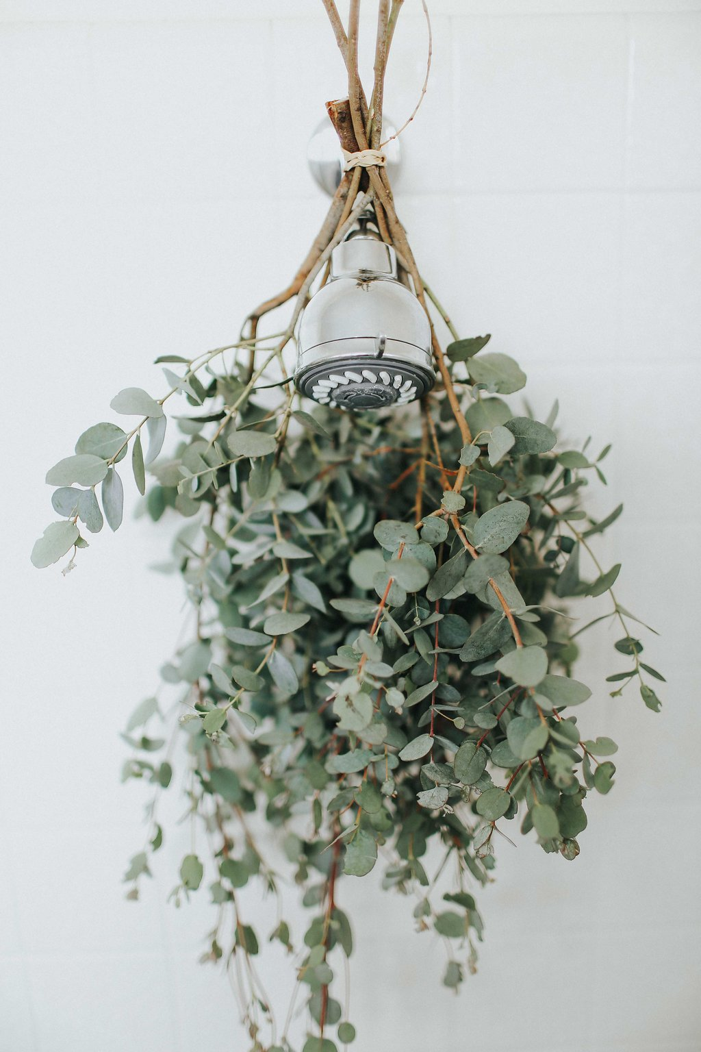 relaxing shower eucalyptus