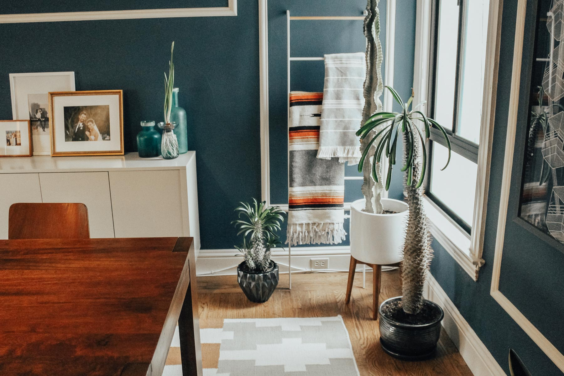 Basic Tips for Taking Care of Indoor Plants